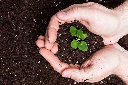 Compost da biotrituratore pacciamatura
