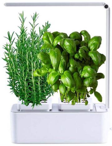 vaso smart erbe aromatiche cucina